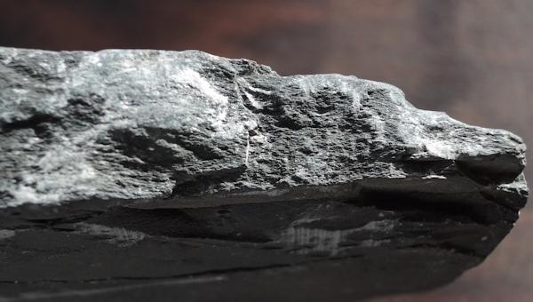化石 三葉虫_e0200879_13065569.jpg
