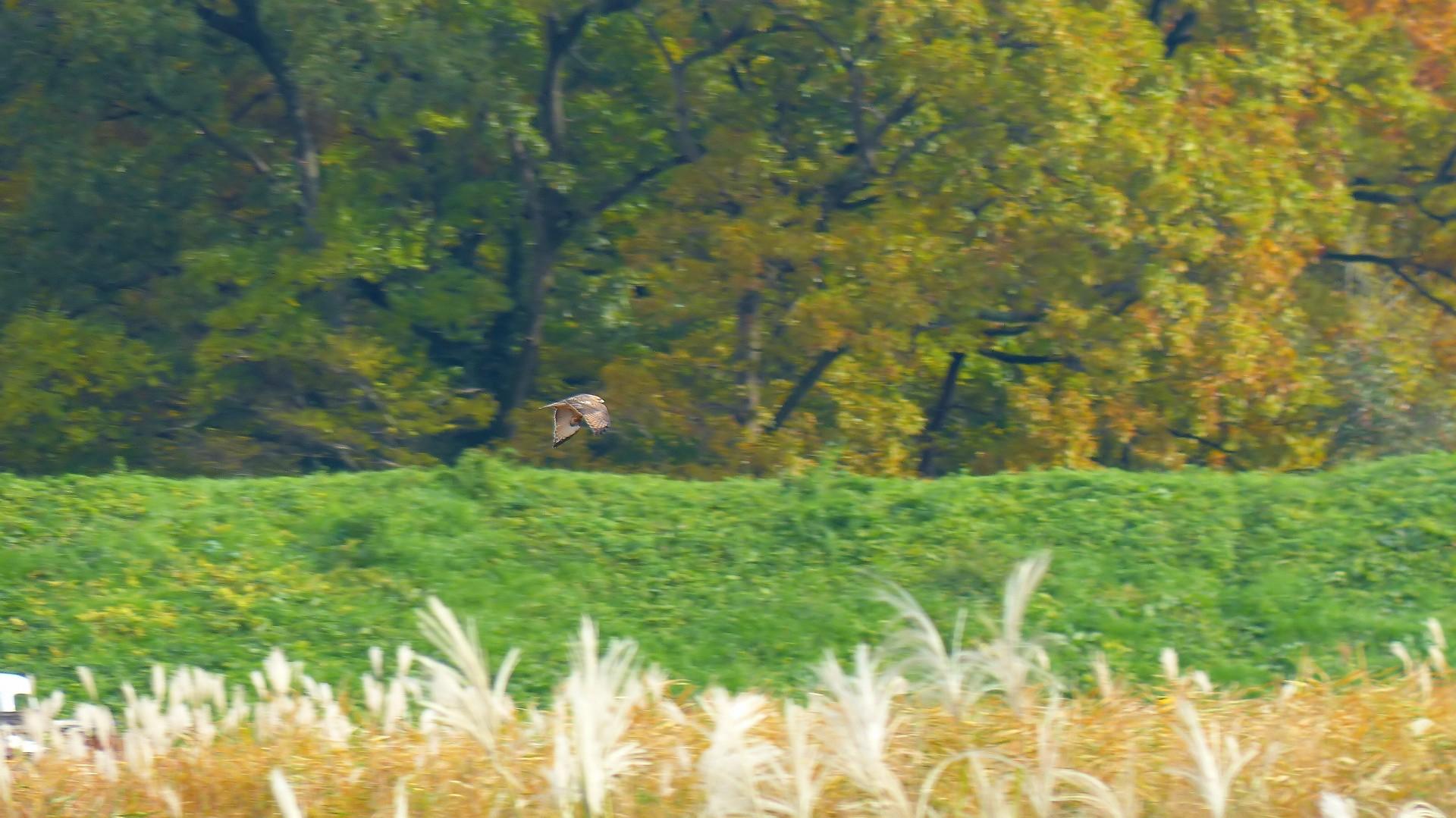 秋を飛ぶ_a0185081_16204467.jpg