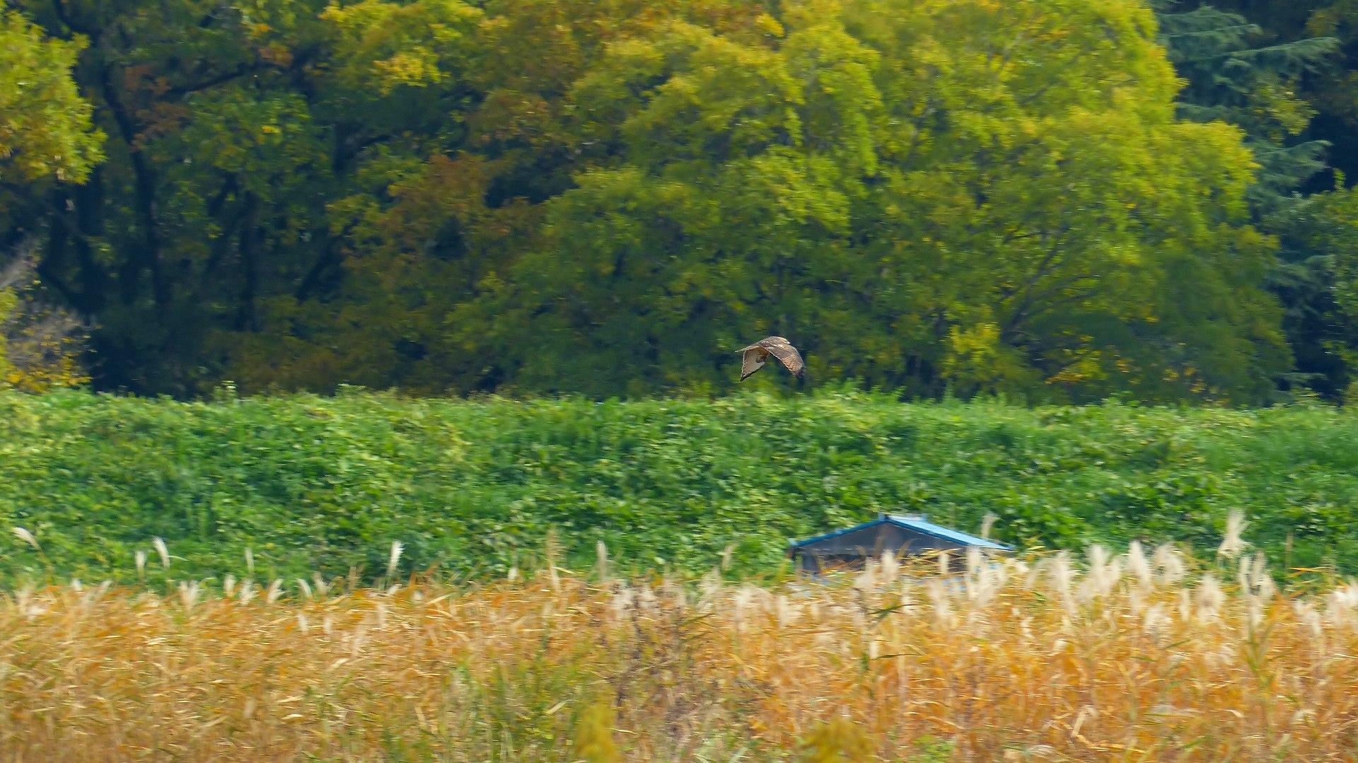 秋を飛ぶ_a0185081_16211617.jpg