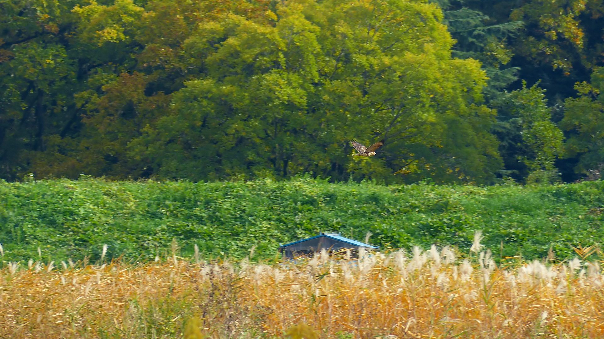 秋を飛ぶ_a0185081_1621262.jpg