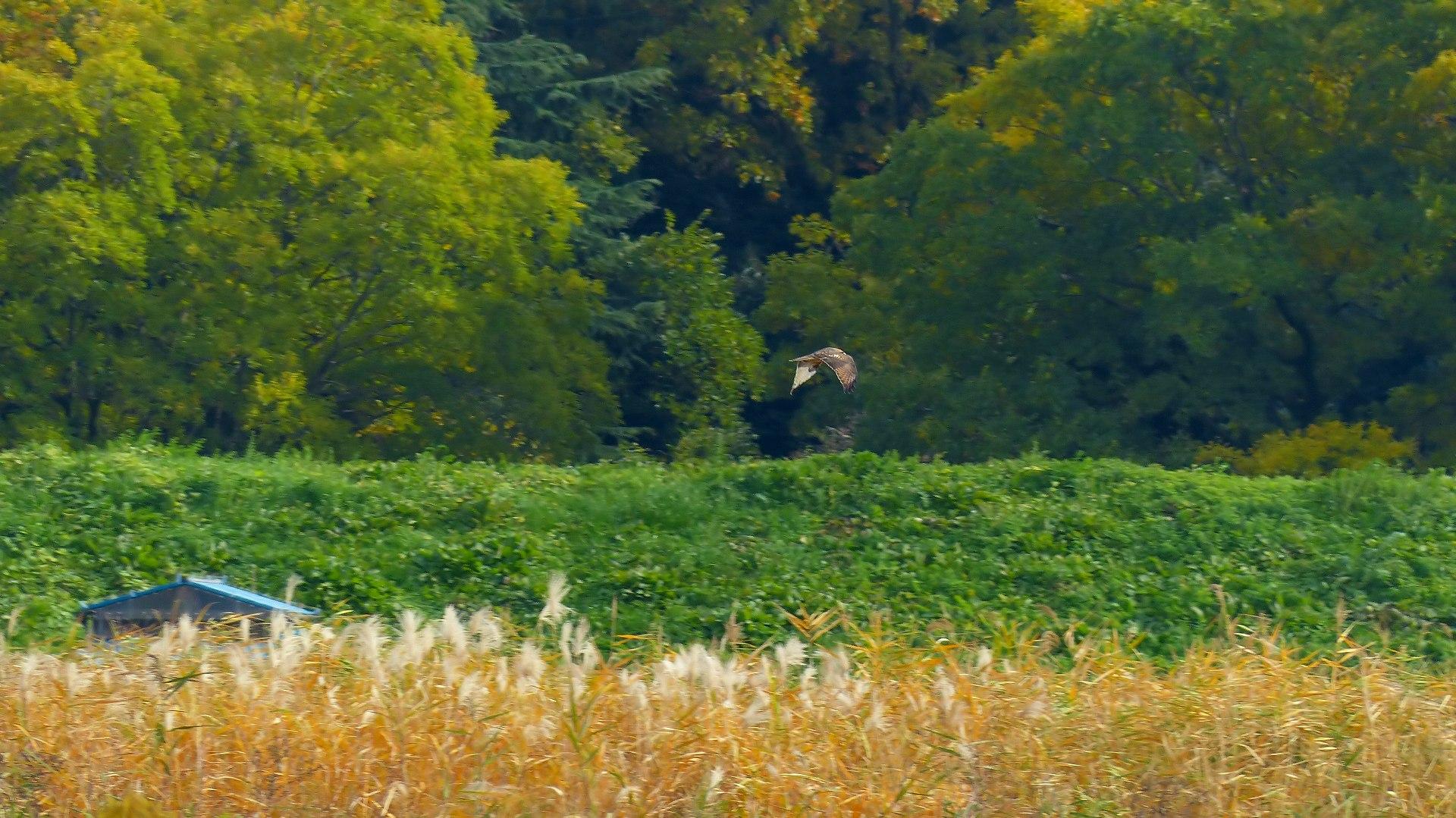 秋を飛ぶ_a0185081_1621361.jpg