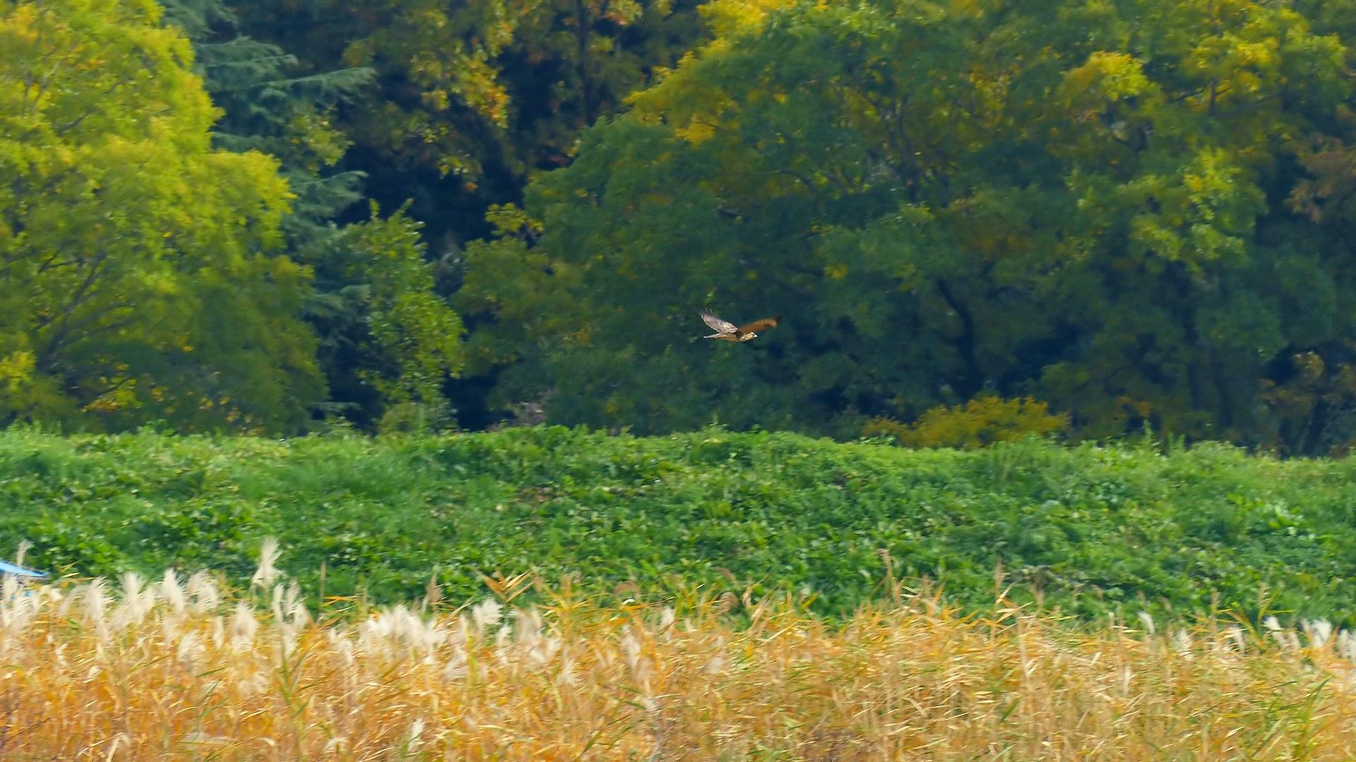 秋を飛ぶ_a0185081_16214896.jpg