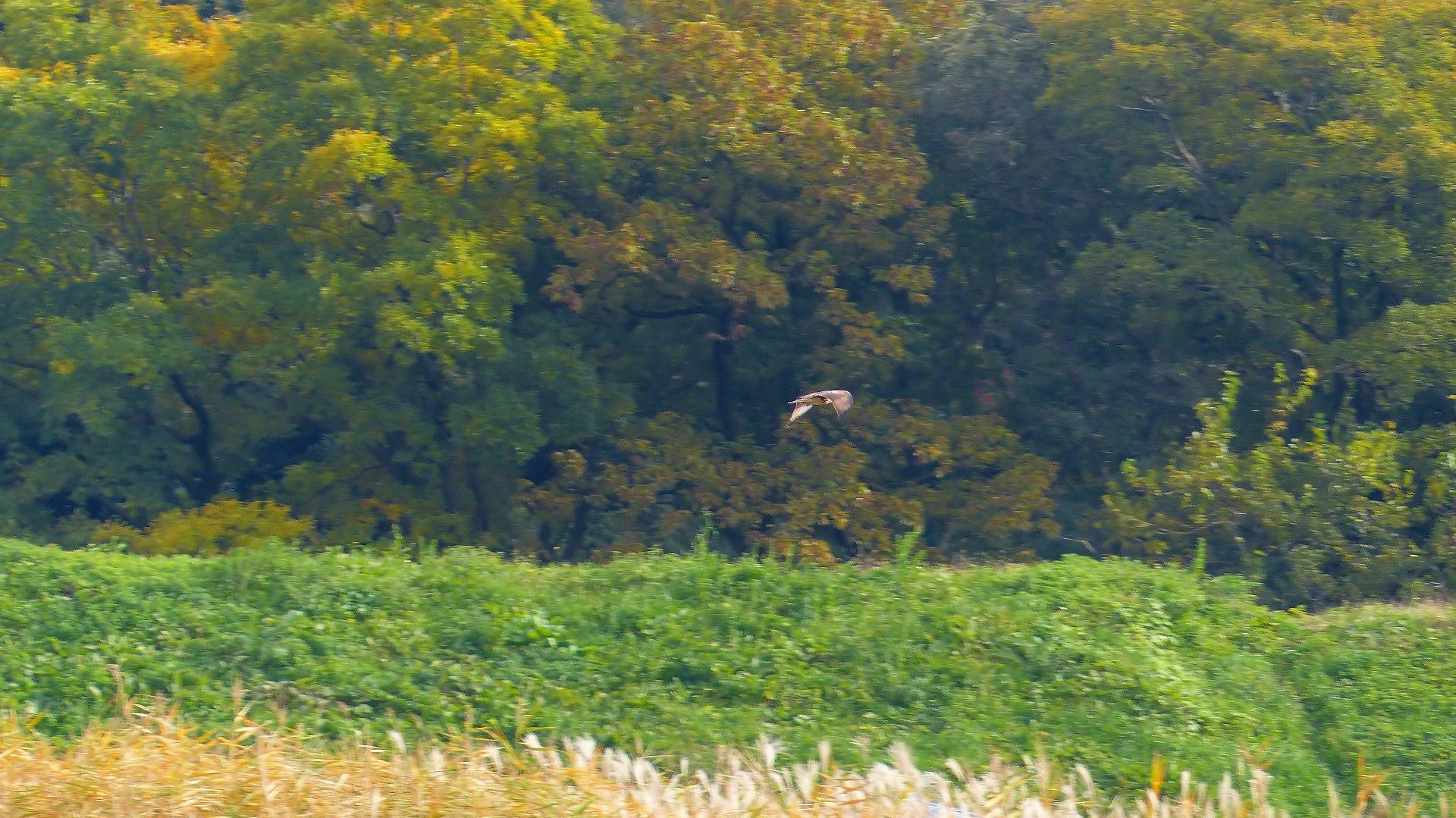 秋を飛ぶ_a0185081_16221855.jpg