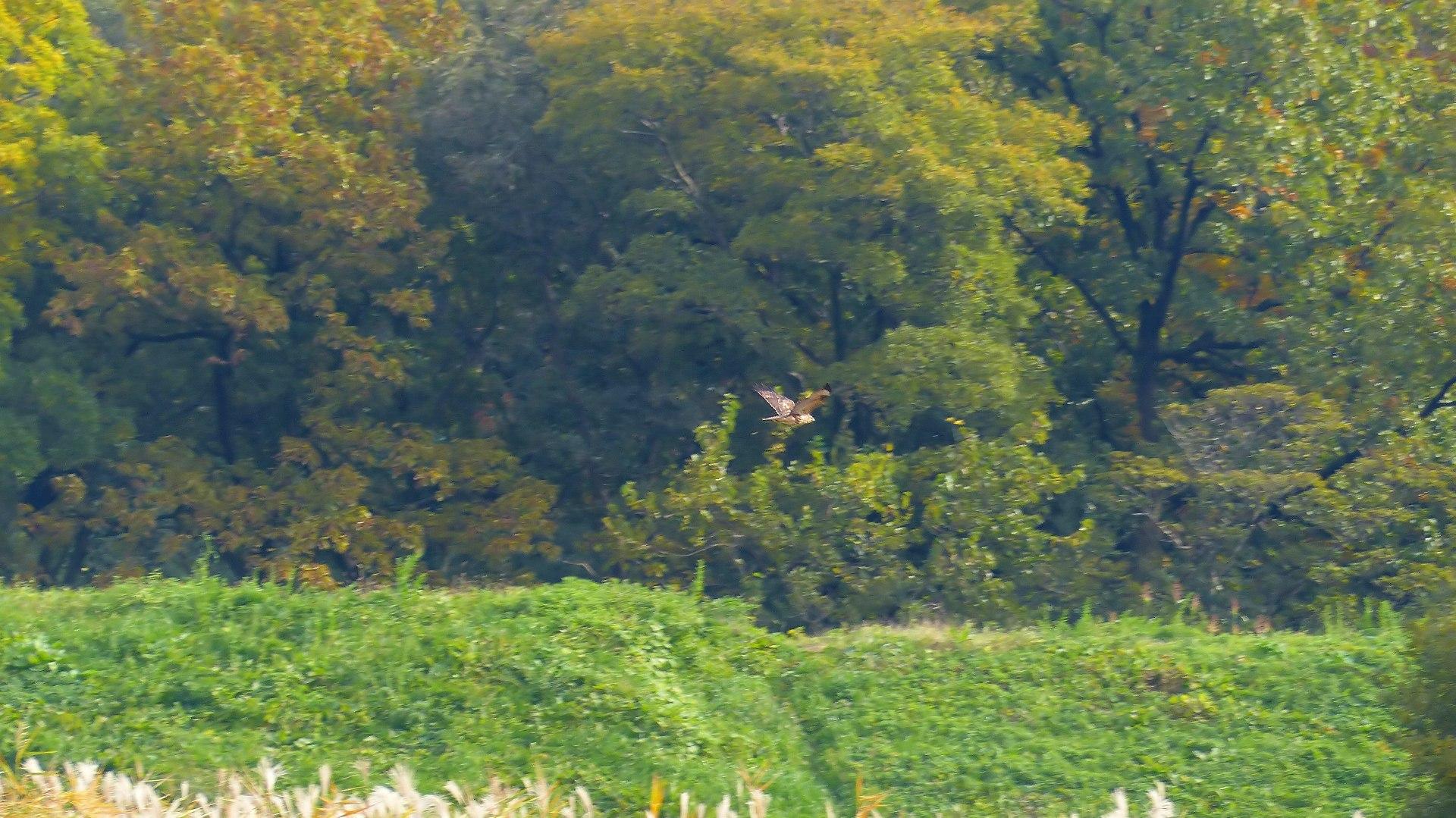 秋を飛ぶ_a0185081_16222961.jpg