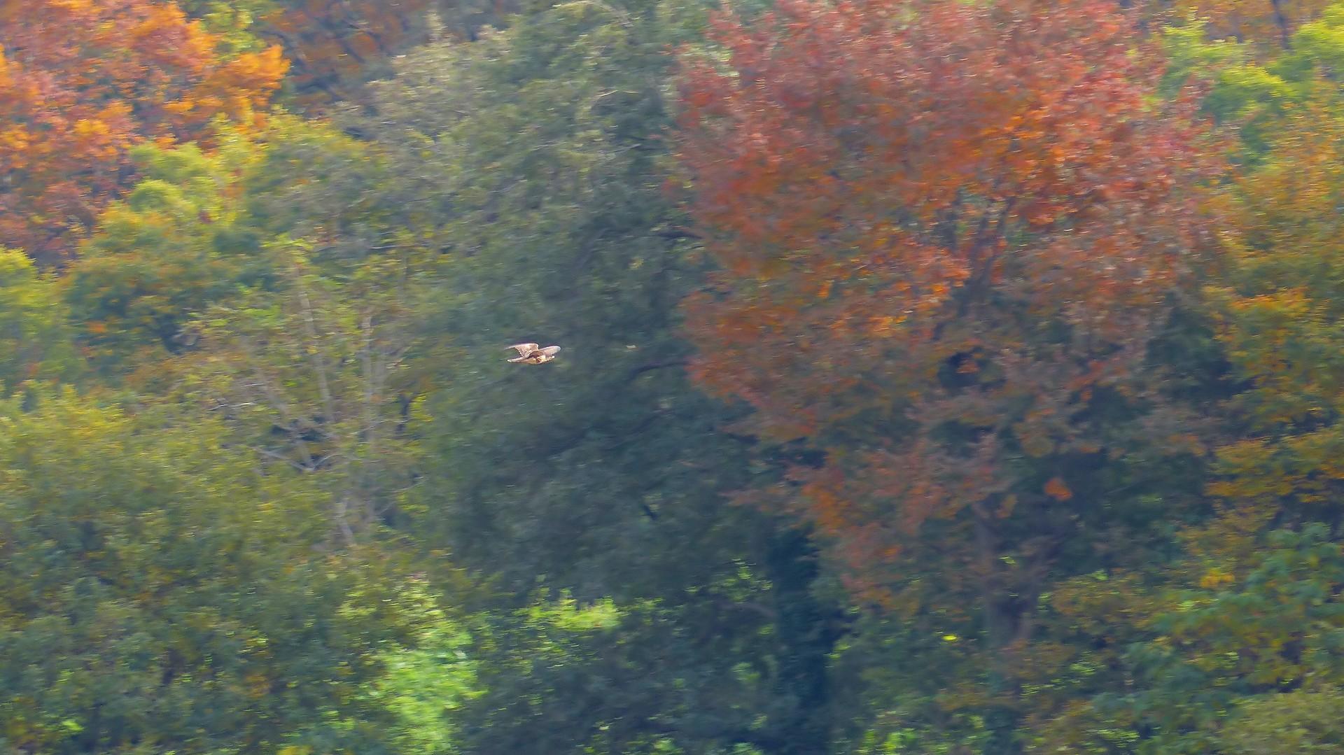 秋を飛ぶ_a0185081_16223960.jpg