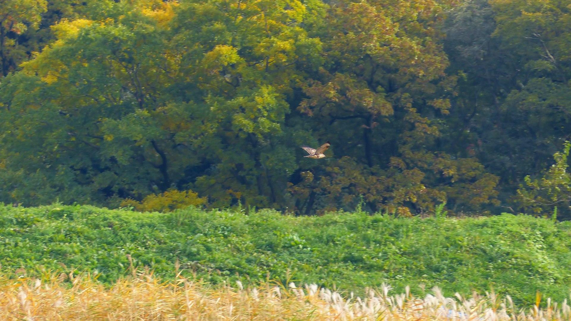 秋を飛ぶ_a0185081_162253.jpg