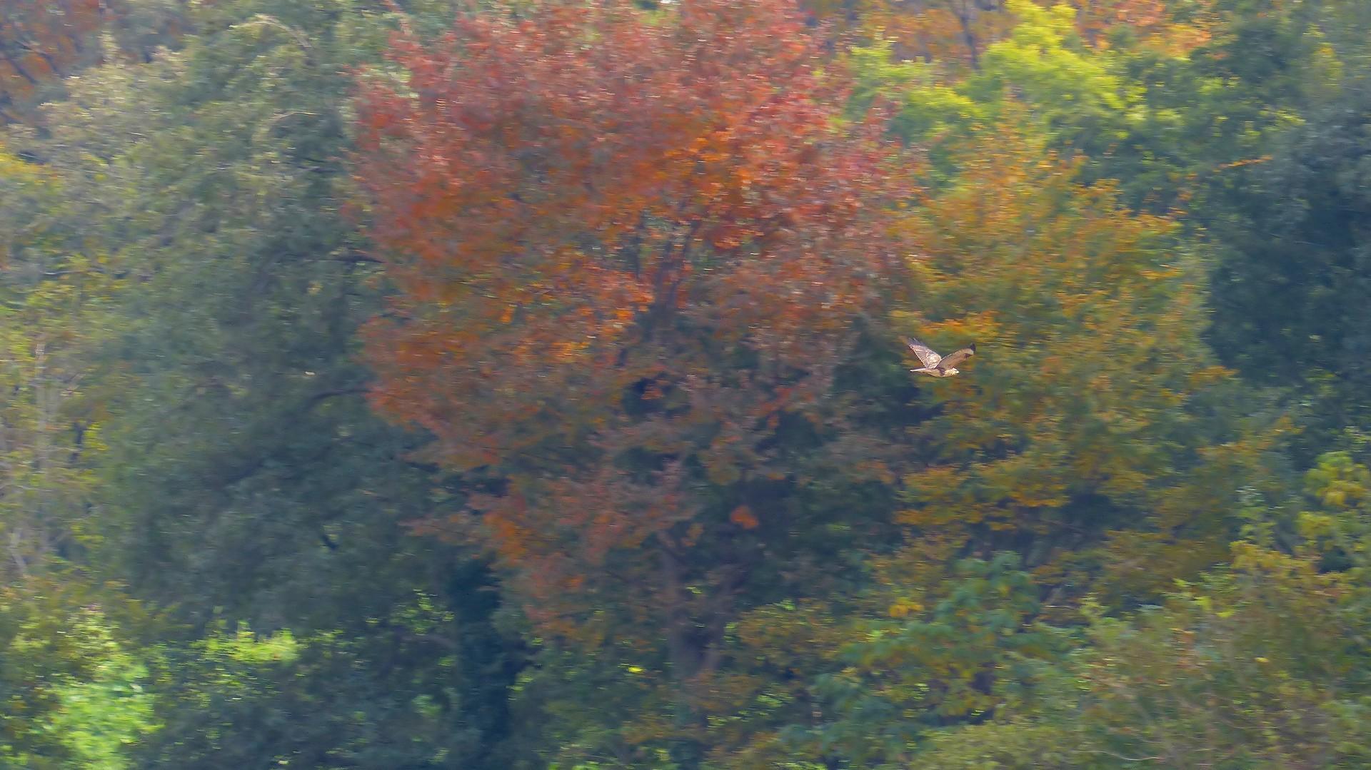 秋を飛ぶ_a0185081_16225385.jpg