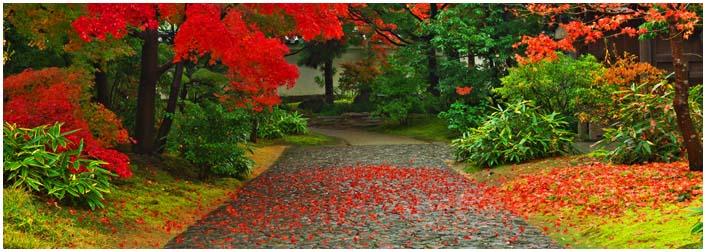 雨の好古園_d0272207_1848552.jpg