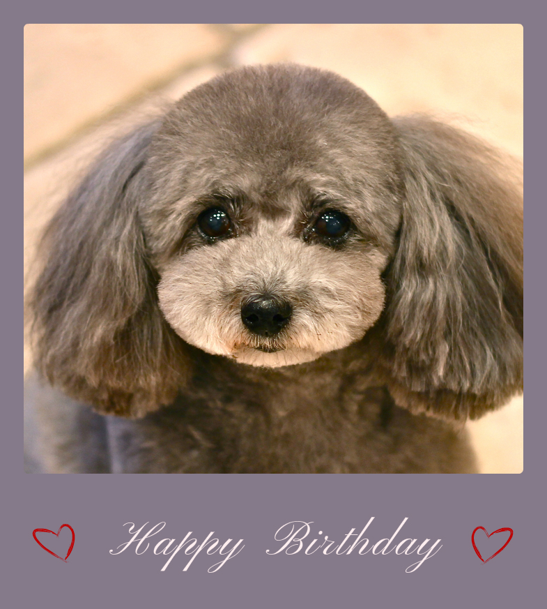Happy Birthday ららちゃん♡_d0060413_19282044.jpg