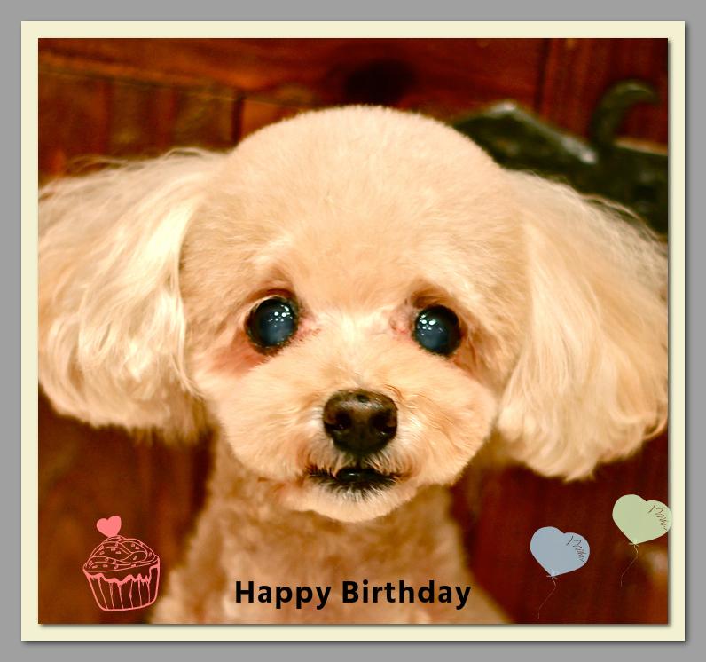 Happy Birthday♡ぷー茶くん&トリミングのお友達♫_d0060413_20015600.jpg