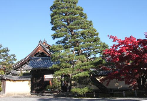 紅葉探訪11 等持院と仁和寺_e0048413_1919435.jpg