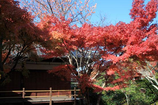 紅葉探訪11 等持院と仁和寺_e0048413_19211824.jpg