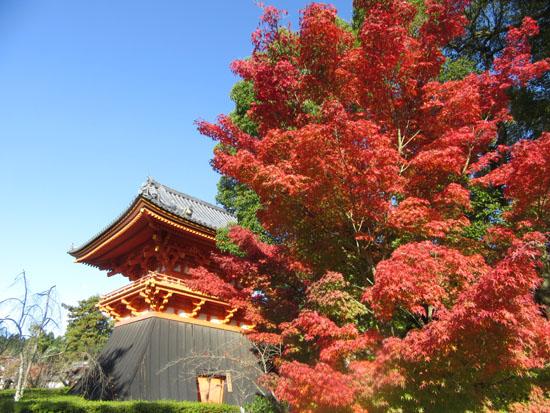 紅葉探訪11 等持院と仁和寺_e0048413_1922797.jpg