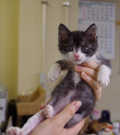 11/22センターレポート 幼猫編   1頭_f0078320_2245228.jpg