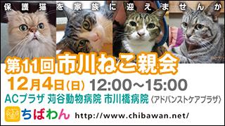 11/22引き出し編 レポート紹介全62頭(+幼猫1頭)_f0078320_303730.jpg