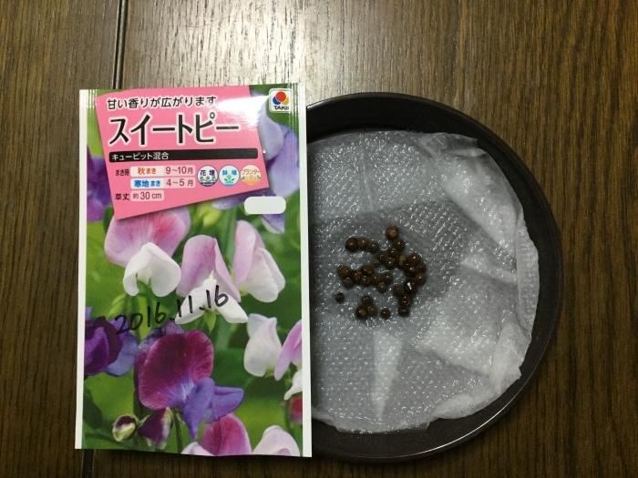 種まき スイトピー