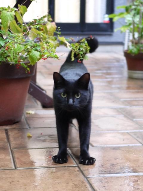 猫のお留守番 風太くん編。_a0143140_22142285.jpg
