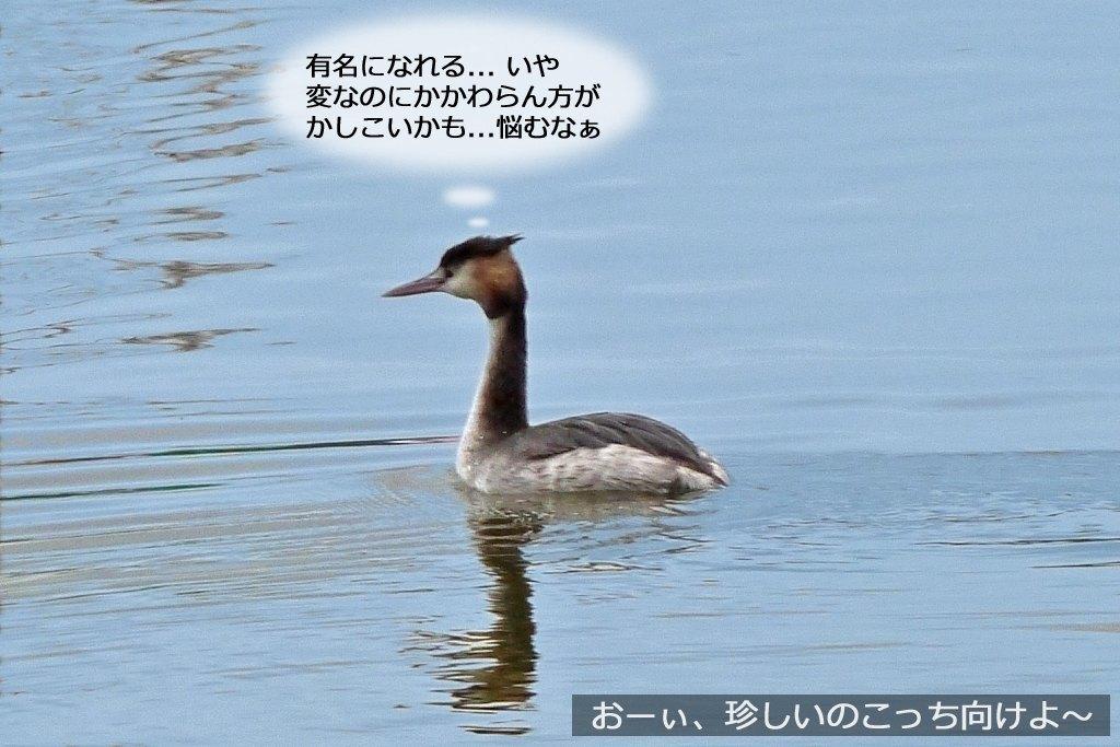 b0174191_17471312.jpg