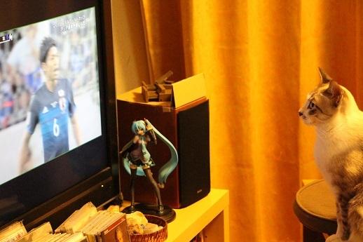 テレビを見るネコ_a0333195_12515513.jpg
