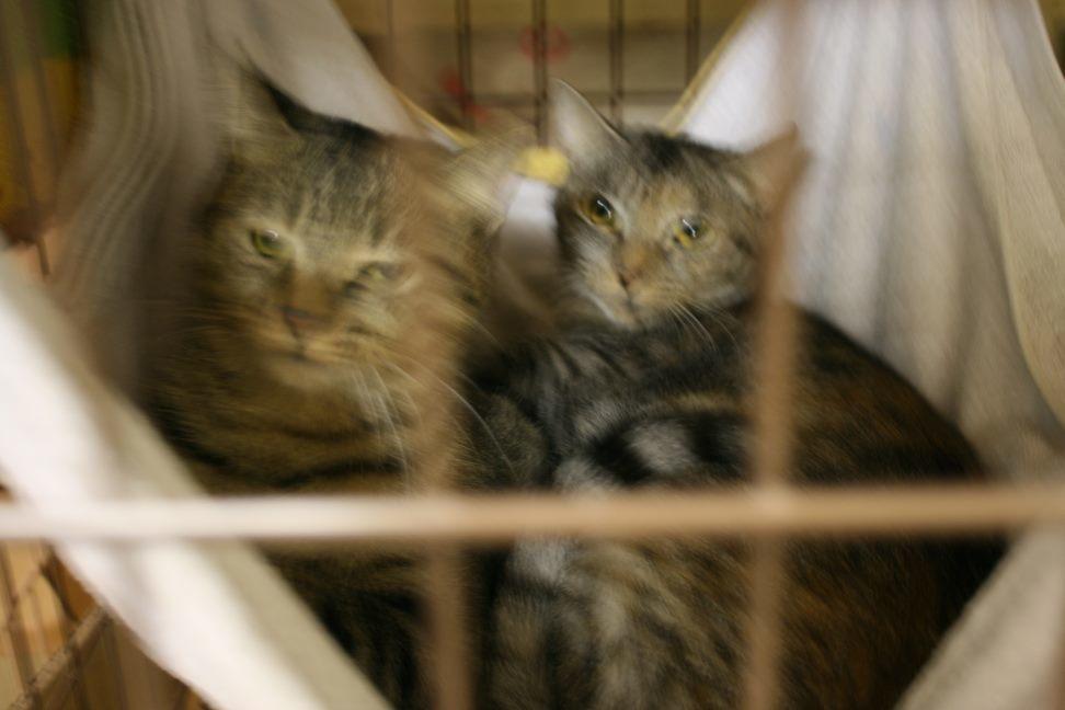 【移動先募集】センター(本所)収容猫(12/24訪問)_f0242002_01515333.jpg