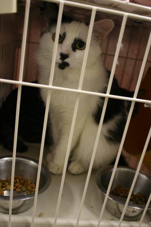 【移動先募集】センター(本所)収容猫(12/24訪問)_f0242002_01520332.jpg