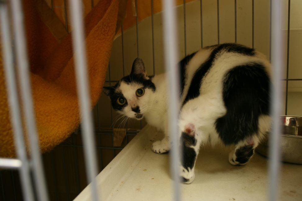 【移動先募集】センター(本所)収容猫(12/24訪問)_f0242002_02034495.jpg