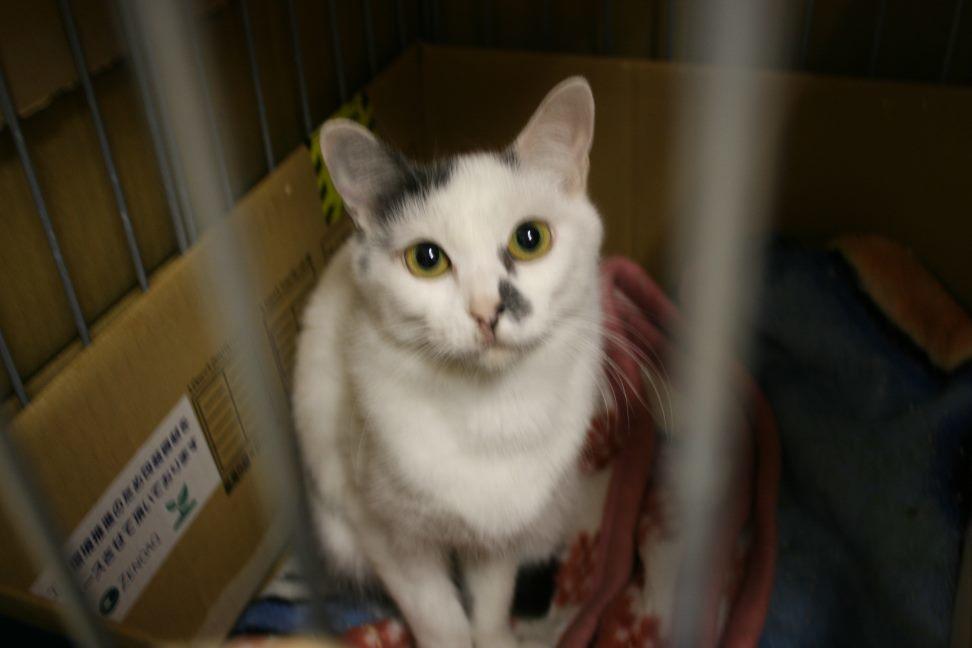 【移動先募集】センター(本所)収容猫(12/24訪問)_f0242002_02034955.jpg