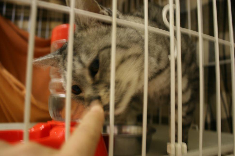 【移動先募集】センター(本所)収容猫(12/24訪問)_f0242002_02114609.jpg