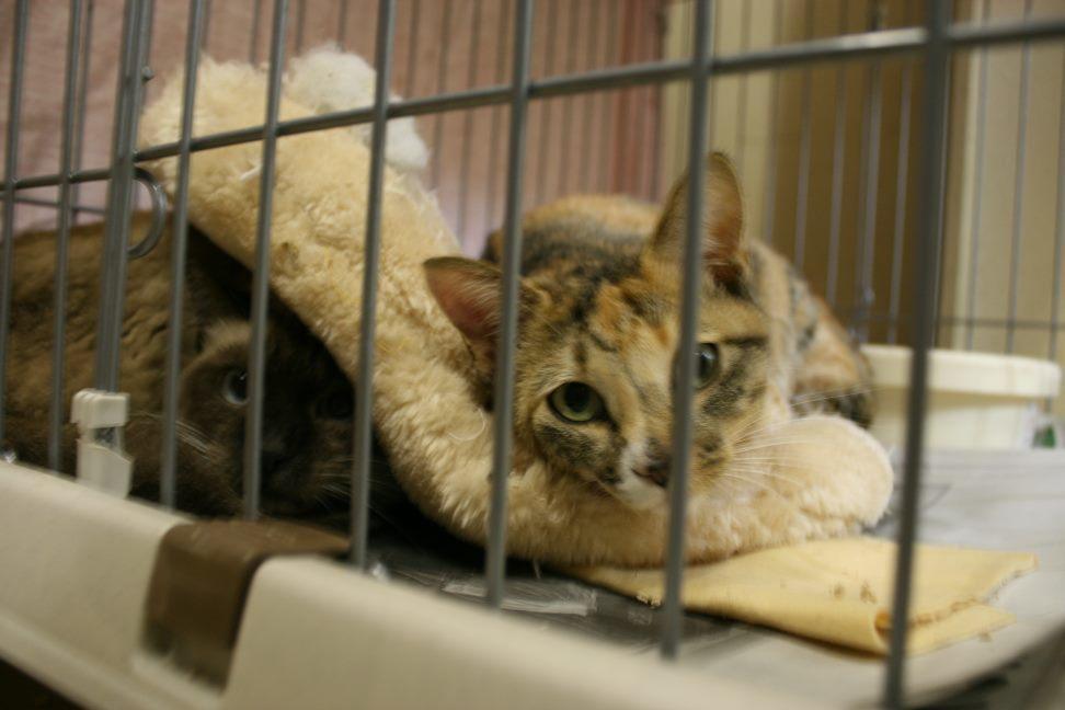 【移動先募集】センター(本所)収容猫(12/24訪問)_f0242002_02123810.jpg
