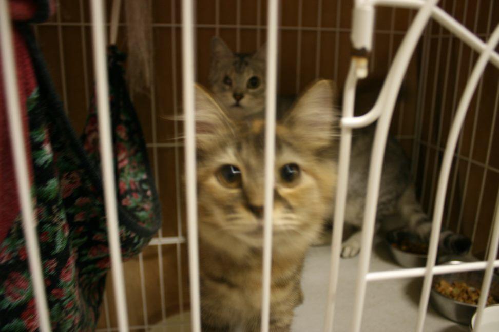 【移動先募集】センター(本所)収容猫(12/24訪問)_f0242002_02125623.jpg