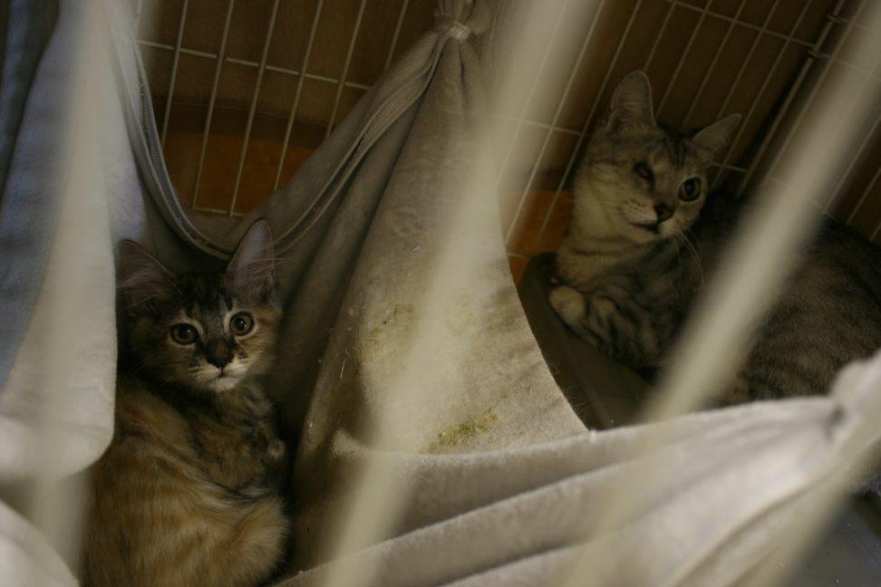 【移動先募集】センター(本所)収容猫(12/24訪問)_f0242002_02221048.jpg