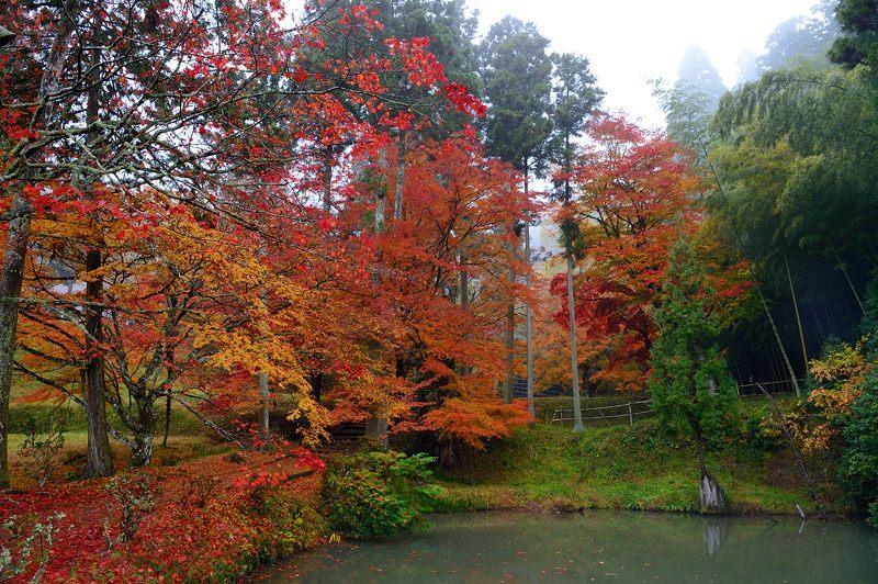 2016京都の紅葉@園部 龍穏寺 其の二_f0032011_16374553.jpg