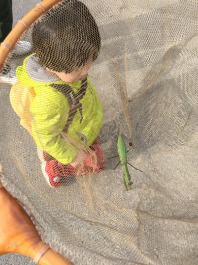 秋ヶ瀬公園で虫採り_b0262124_22284497.jpg
