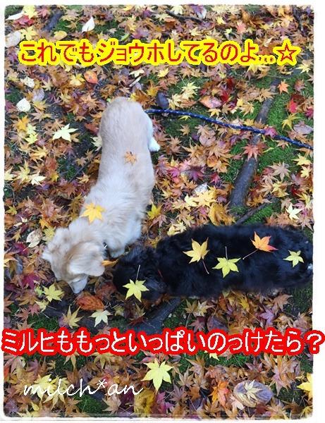 b0115642_20415636.jpg