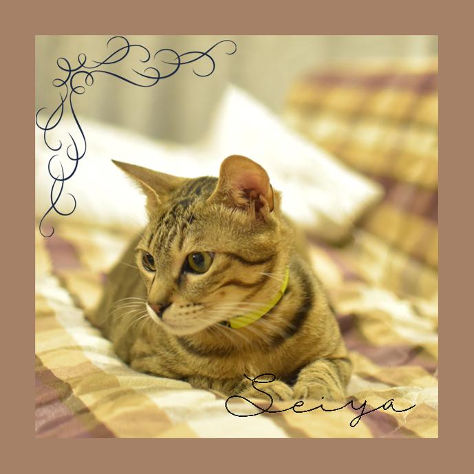 Photographia Lesson 2回目_c0345348_09234151.jpg