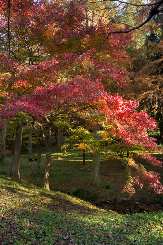 #419 樹木公園_d0342652_214396.jpg