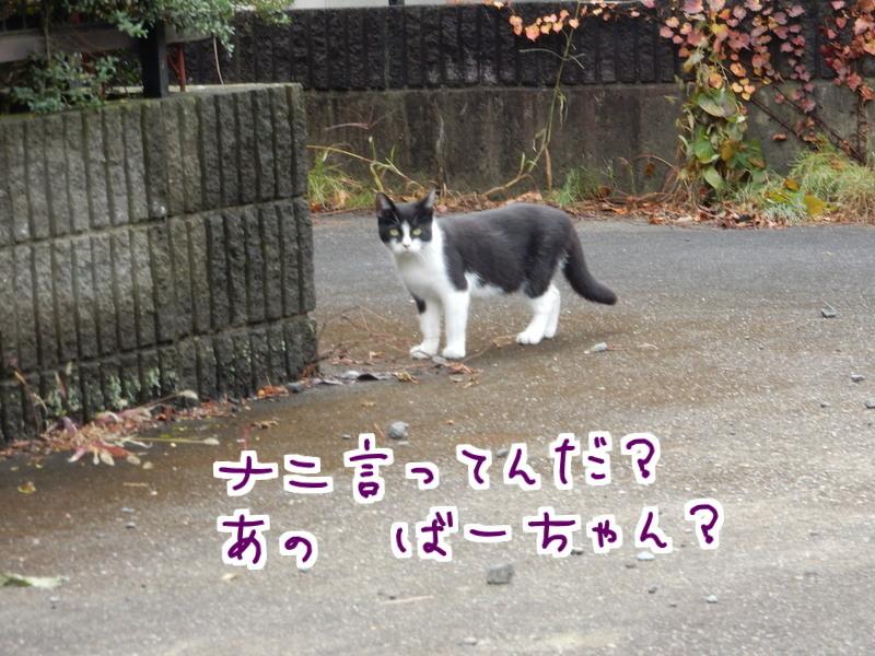 桃江レポート(2)_e0355177_13245128.jpg