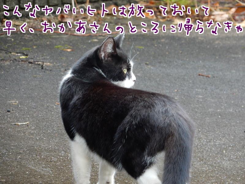 桃江レポート(2)_e0355177_13245981.jpg