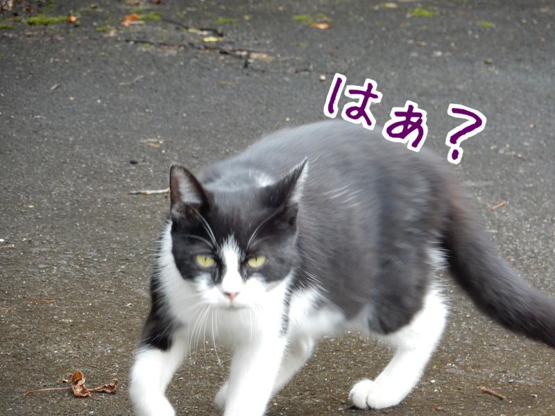 桃江レポート(2)_e0355177_13250676.jpg