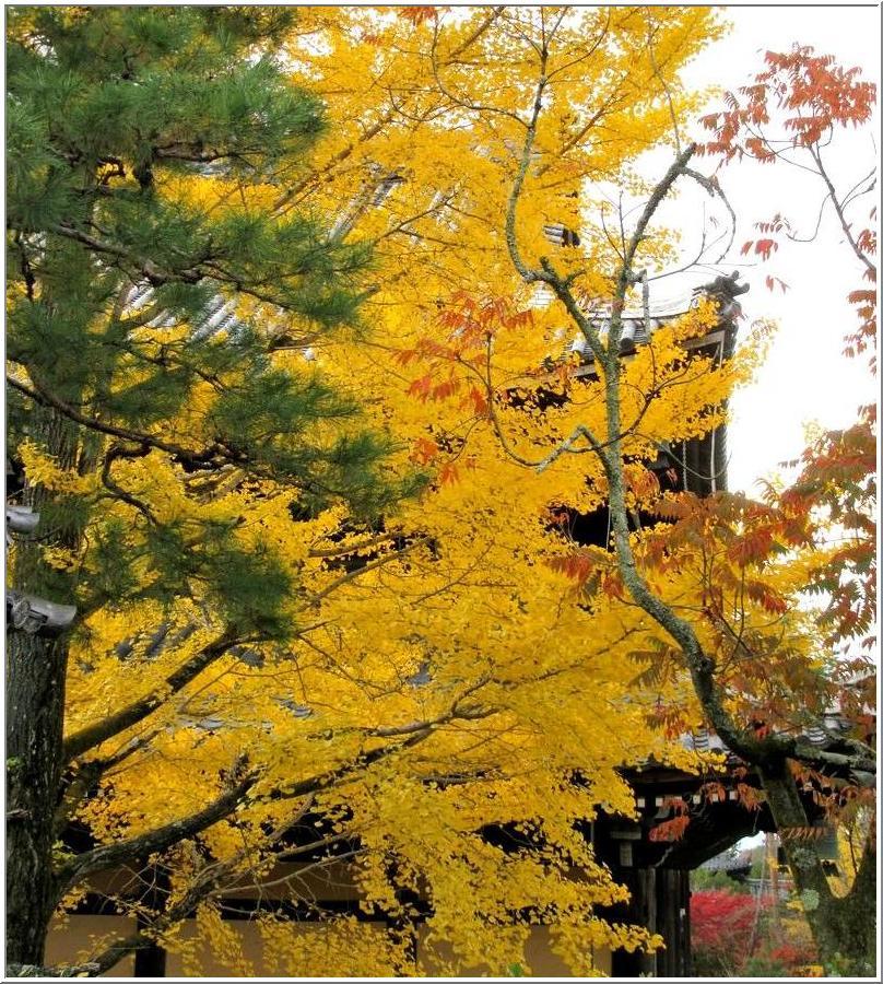 南禅寺かいわいを、ぶらりと散歩_b0104092_1730977.jpg