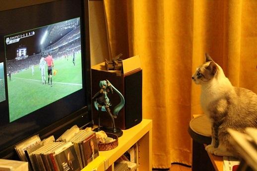 テレビを見るネコ_a0333195_13341249.jpg