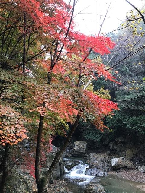 摂津峡_f0204295_20540739.jpg