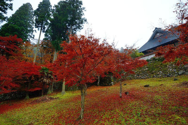 2016京都の紅葉@須知 玉雲寺_f0032011_18394516.jpg