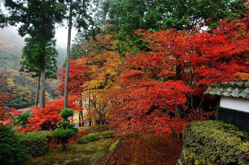 2016京都の紅葉@須知 玉雲寺_f0032011_18395589.jpg