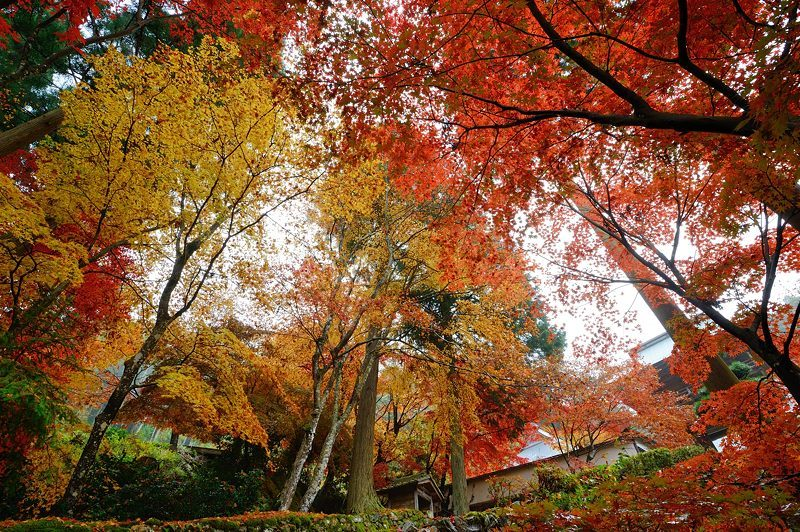 2016京都の紅葉@須知 玉雲寺_f0032011_18453751.jpg