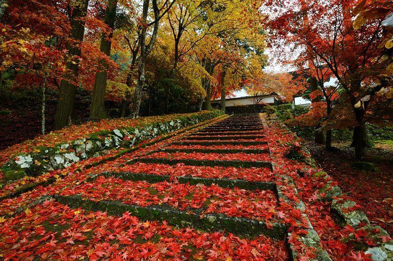 2016京都の紅葉@須知 玉雲寺_f0032011_18454018.jpg