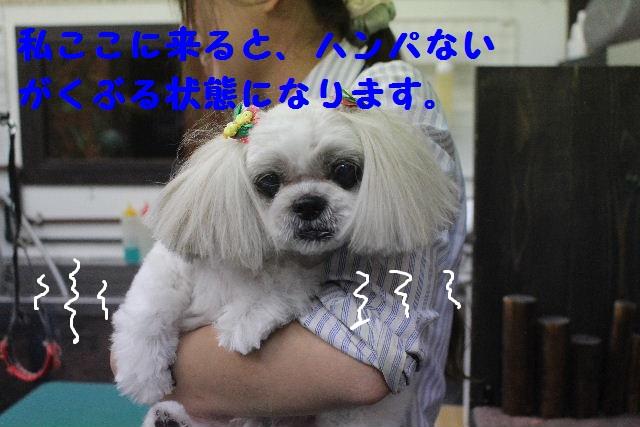 b0130018_852520.jpg