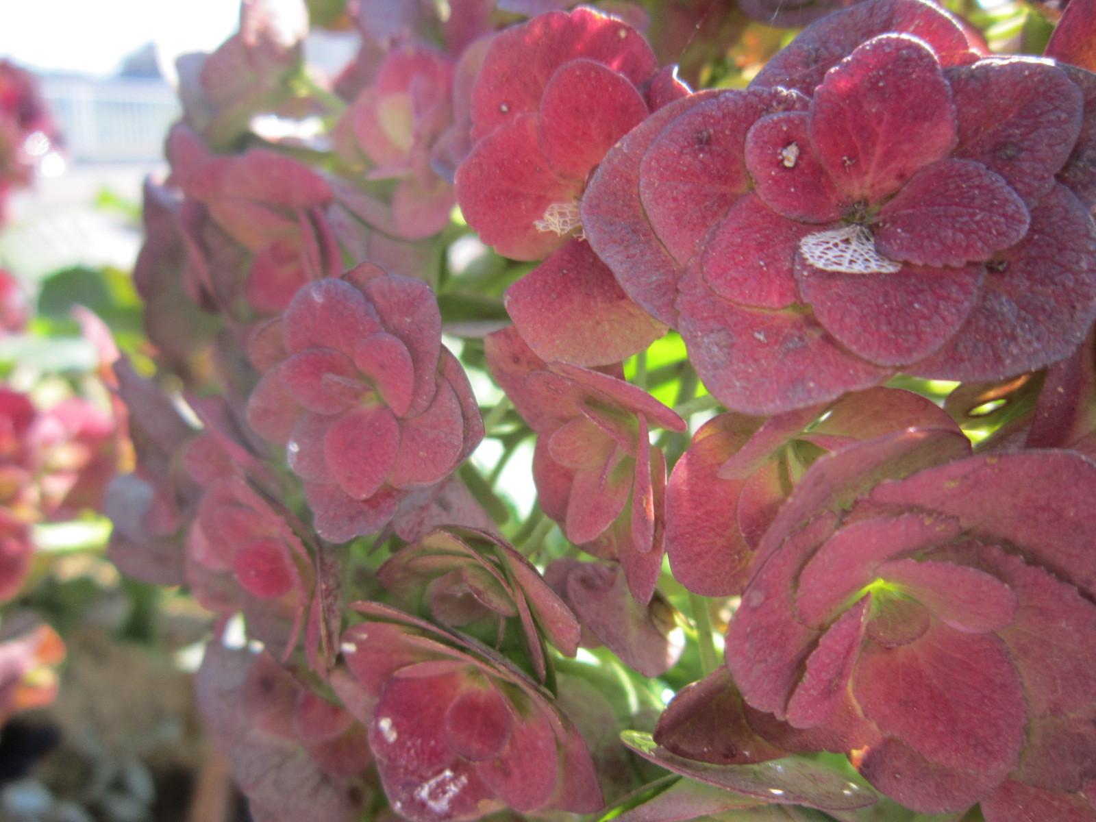 季節はすっかり秋・・・ガーデンフローの植物たち_e0361918_15255507.jpg