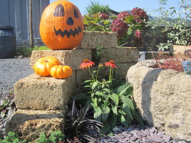 季節はすっかり秋・・・ガーデンフローの植物たち_e0361918_15271518.jpg
