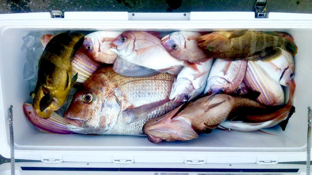釣り大会後の釣果!_a0132631_18004863.jpg